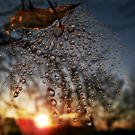 Goodbye Sun  ...We Are Waiting Sunrise by Marija Jilek - Nature Up Close Natural Waterdrops