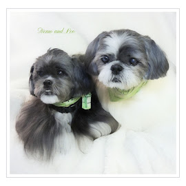 My little ''fur babies''. by Carolyn Kernan - Typography Captioned Photos