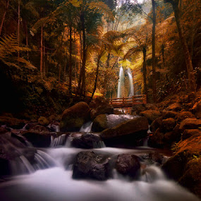 Autumn River Song by Hendri Suhandi - Landscapes Forests ( tree, jungle, waterfall, forest )