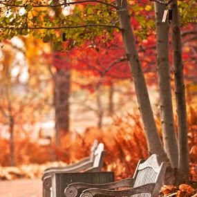 Fall by John CHIMON - City,  Street & Park  City Parks ( pwcbenches )