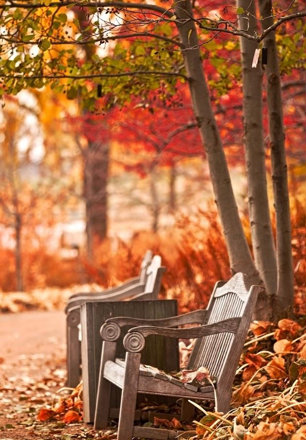 Fall by John CHIMON - City,  Street & Park  City Parks ( pwcbenches )