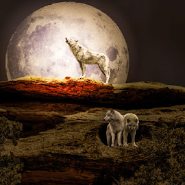 Howl by Eugene Linzy - Digital Art Animals ( desert, night, wolves, full moon, rocks )