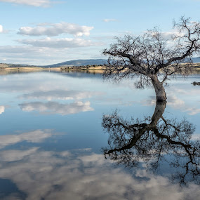 Reflections by Ricardo Figueirido - Landscapes Waterscapes