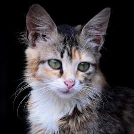 by Ilham eka Prasetya - Animals - Cats Kittens