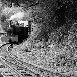 Narrow Gauge by DJ Cockburn - Transportation Trains ( west sussex, monochrome, black and white, vintage, peter, railroad, forest, amberley, amberley museum & heritage centre, narrow gauge, w. g. bagnall, grayscale, steam locomotive, england, railway, 0-4-0, train, tank engine, bagnall 0-4-0st, saddle tank, antique, classic )