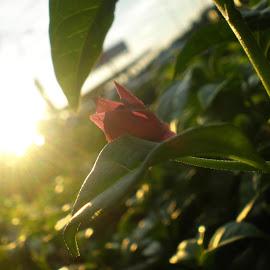 by Khanthan Nair - Nature Up Close Gardens & Produce