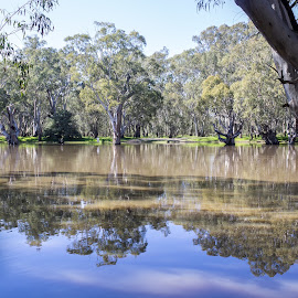 High water reflections by Trevor Smart - Landscapes Waterscapes ( water, deniliquin, edwards river, reflections, nsw., river )