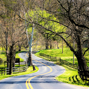 Early Spring by Leah Zisserson - City,  Street & Park  Vistas ( byway, street, virginia, fences, road, spring, rural,  )