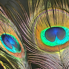 Reflection of feather by Mihir Ranjan - Digital Art Abstract ( abstract of peacock feather, abstarct, fine art, peacock feather, feather, reflection of feather )