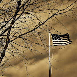 Old Glory by April Smith - Novices Only Objects & Still Life