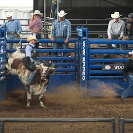 Bull Riding by Terri Butler - Sports & Fitness Rodeo/Bull Riding ( #cowboy, #rodeo, #fair, #bullriding )