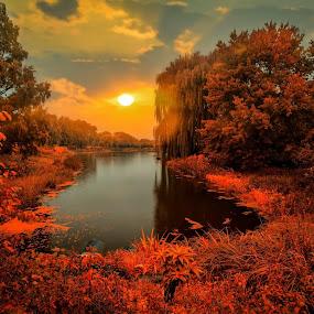 Sunset at the Chicago Botanic Garden by Gene Brumer - Landscapes Sunsets & Sunrises ( reflection, sunset, botanic garden, trees, son, chicago, pond )