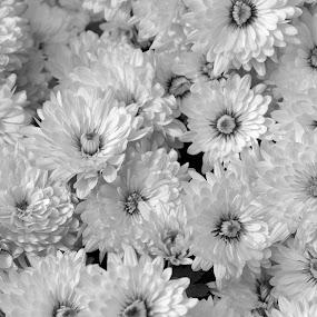 CHANDRAMALLIKA B&W #1 by Debanjan Goswami - Black & White Flowers & Plants (  )