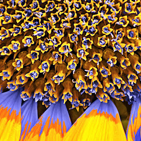 surfers by Keple MN - Abstract Fine Art ( abstract, macro, patterns, fineart, flowers )