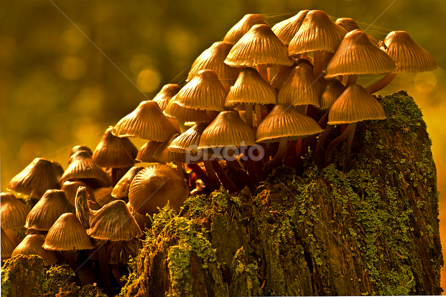 Together by Peter Samuelsson - Nature Up Close Mushrooms & Fungi