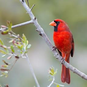 Bokeh  by Sandy Hurwitz - Animals Birds