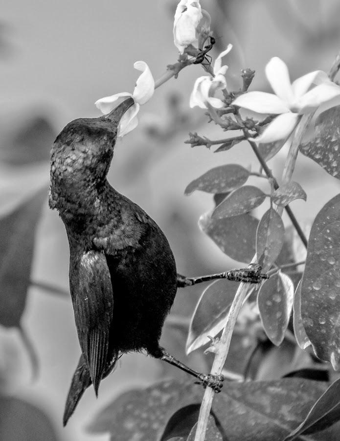 by Mohsin Raza - Black & White Animals (  )