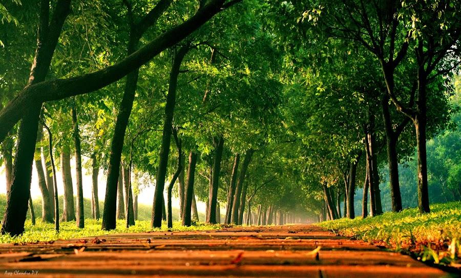 Morning Light by Asep Chandra - City,  Street & Park  Vistas
