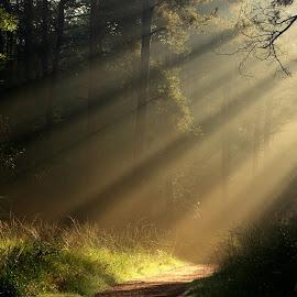 Light by Hilda van der Lee - Landscapes Forests ( nature, autumn, sunrays, forest, light )