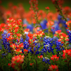 Red and Blue bouquet by Brenda Shoemake - Flowers Flowers in the Wild (  )