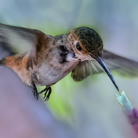 Morningside Diner by David Hammond - Digital Art Animals ( flying, animals, manipulations, hummingbird, digital art, birds, composite,  )