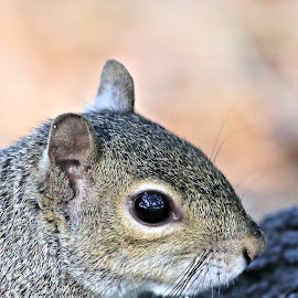 Tuesday At Zephyr Park 29 by Terry Saxby - Animals Other Mammals ( terry, florida, zephyrhills, saxby, nancy, usa, squirrel )