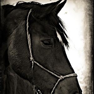 horse tt.jpg