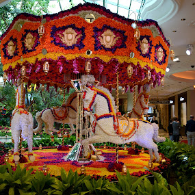 Spinning flowers by Vita Perelchtein - Novices Only Objects & Still Life ( las vegas, colur, spinning, art, carousel, vegas strip, hotel, flowers, downtown, begas )
