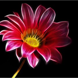 flower art by Leon Pelser - Digital Art Things ( 1/160, no flash, f 2.8, iso 125, auto wb,  )
