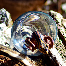Wine Glass with Wood 4 by Shawn Thomas - Artistic Objects Glass ( wine, wood, gecko, glass, refraction )