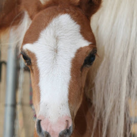 SASSY PANTS by Colette Griffin - Animals Horses