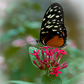 Beauty in motion by Vicki Overman - Nature Up Close Gardens & Produce ( butterfly flower )