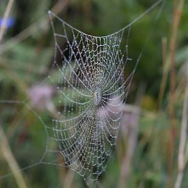 by OL JA - Nature Up Close Webs