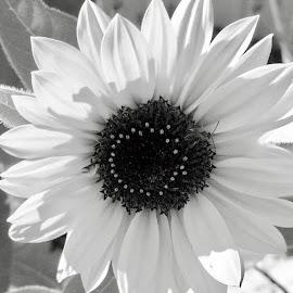 by Debbie Squier-Bernst - Black & White Flowers & Plants