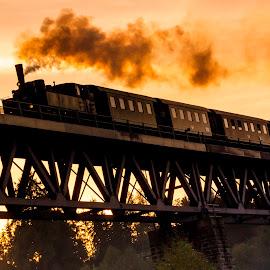 Steam Locomotive MLV Zwettl Dirndlexpress 2 by Franz  Adolf - Transportation Trains