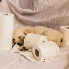 lazy time by Mike Looby - Animals - Dogs Puppies