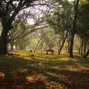 Cubbon Park at its best... by BhanuKiran BK - City,  Street & Park  City Parks ( park, bench, cubbon, cubbon park, pwcbenches,  )