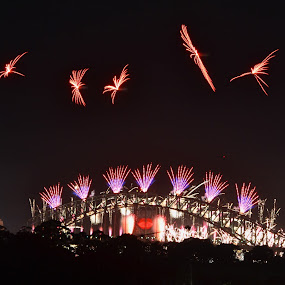 Flamebirds by Kamila Romanowska - Public Holidays New Year's Eve ( harbour bridge, 2013, new year, australia, harbour, nye, fireworks, bridge, sydney )