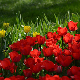 by Mehmet Kaya - Flowers Flower Gardens (  )
