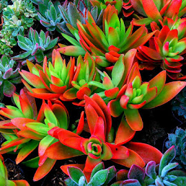 Colorful Plants by Prince Frankenstein - Instagram & Mobile Android ( colorful, beautiful, plants, photography, mobile )