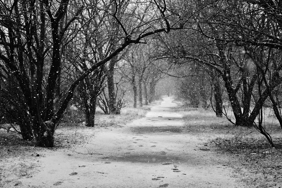 Winter tale by Nicu Buculei - Nature Up Close Trees & Bushes ( winter, snow, trees, forest, road,  )