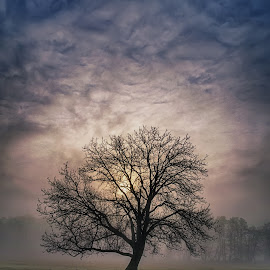 Misty morning by Plamen Petkov - Landscapes Sunsets & Sunrises ( clouds, sky, tree, fog, trees, sunrise, landscape, misty, mist )