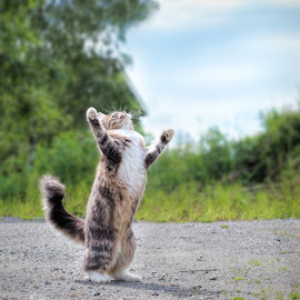 Ah! Finally dry weather! by Jane Bjerkli - Animals - Cats Playing ( cat, grass, green, cute, norway, playing, sweet, sky, pet, fur, summer, paws, animal )