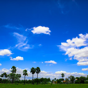 Flying Clouds,,, by Boodesh Ganeshkumar - Landscapes Cloud Formations ( palm, clouds, blue sky,  )