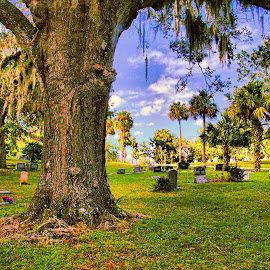 by Rob Whidden - City,  Street & Park  Cemeteries (  )