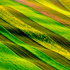 Moravia Fields by Stanley P. - Landscapes Prairies, Meadows & Fields ( meadows, fields )