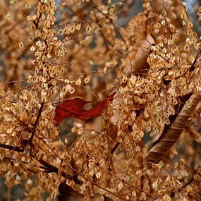Autumn Leaf by Carl Testo - Nature Up Close Leaves & Grasses ( hcl, autumn, leaf )