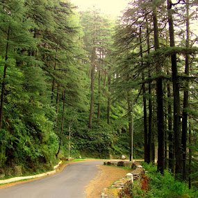 Chail..Himachal Pradesh India by Srabani Mitra - Travel Locations Landmarks ( himachal pradesh, paths to nature, india, pwcpaths )