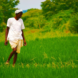 Indian Farmer by Amaresh Jana - Nature Up Close Gardens & Produce ( farmer, green )
