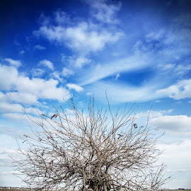 Lone Tree On The Prairie by T Sco - Landscapes Prairies, Meadows & Fields ( field, sky, winter, post, tree, nature )